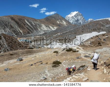 Yaks caravan on the trek at the foot of mount Everest (8848 m) near Dughla village - Nepal, Himalayas