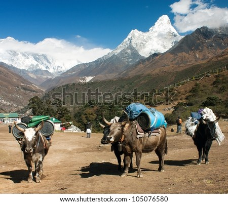 yaks with goods on the way to Everest base camp and Ama Dablam, Lhotse, Nuptse and top of Everest