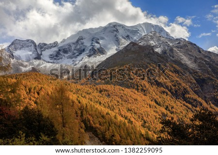 Yala Snow Mountain towering in the distance. Tibet area of Sichuan Province China, Valley covered in golden trees, autumn fall colors. Ganzi Tibetan Plateau Chinese Landscape, Majestic Mountains #1382259095