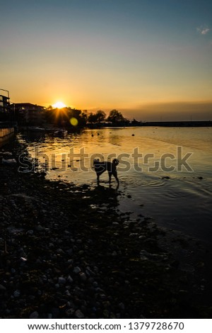 Yalova, Marmara / Turkey - April 19, 2019: A stray dog looking for food in shallow areas nearby the shoreline next to local fishermen shelter #1379728670