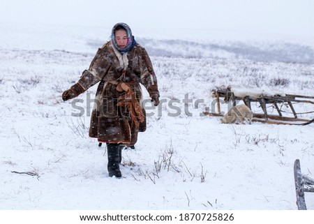 Yamal peninsula, Siberia. A herd of reindeer in winter, a reindeer breeder's daughter helps manage a herd of reindeer in the tundra nearby of the polar circle in a cold winter day.