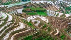 Yaoshan Mountain, Guilin, China hillside rice terraces landscape.