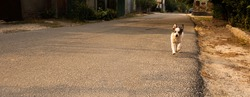Yard stray puppy runs along the road, photo in motion, autumn leaves and mood