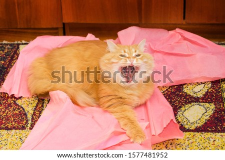 Yawning fluffy ginger cat lies on the crumpled pink paper sheets on the motley floor carpet