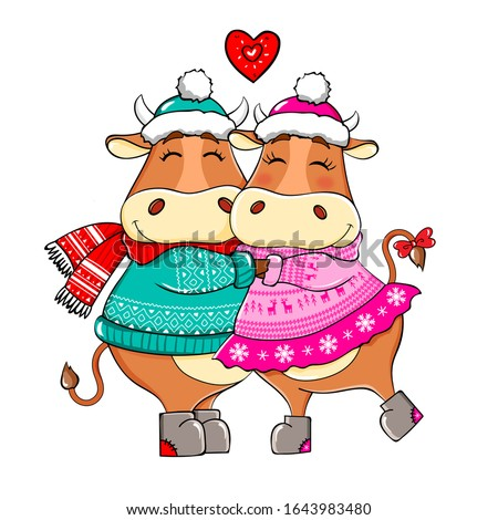 Year of the bull 2021. Year of the ox 2021. Happy Cows. Cute Bulls in love in a scarves. New year and merry christmas illustration. Bull zodiac symbol of the year 2021. Valentine's day.