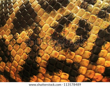 yellow anaconda skin from alive body