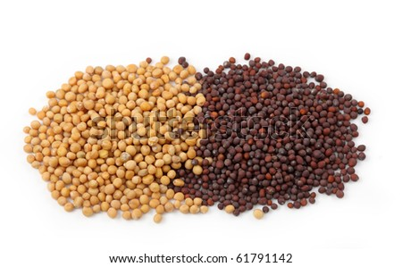 Yellow and brown mustard seeds isolated on white background