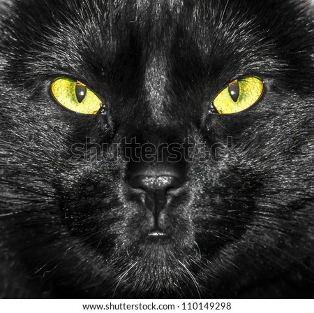 Yellow and Green Eyes of Black Cat (face close up)