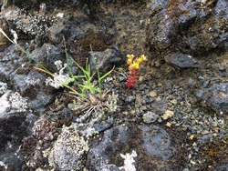Yellow and green plants on mossy rocks