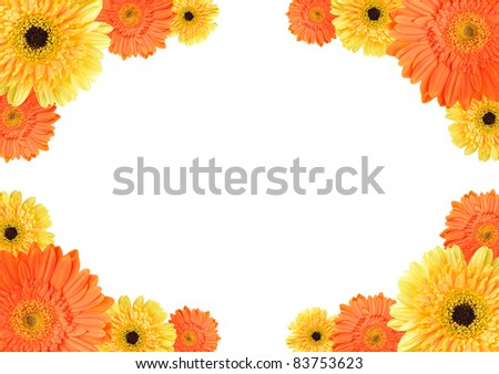 and orange daisy-gerbera flowers create a frame on white background ...