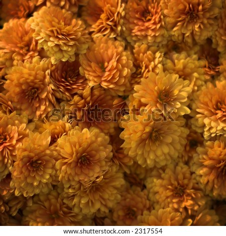 Yellow and orange fall flowers