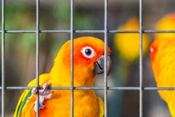 Yellow and orange parrot in a cage at public park