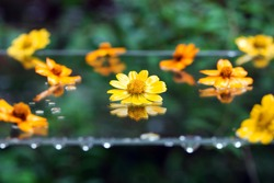 Yellow and orange petals studded on glass table on the garden terrace