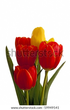 Yellow and orange tulips isolated on white