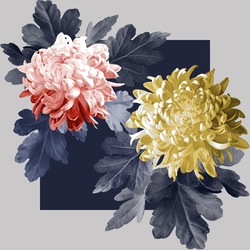 Yellow and red chrysanthemum with blue leaves