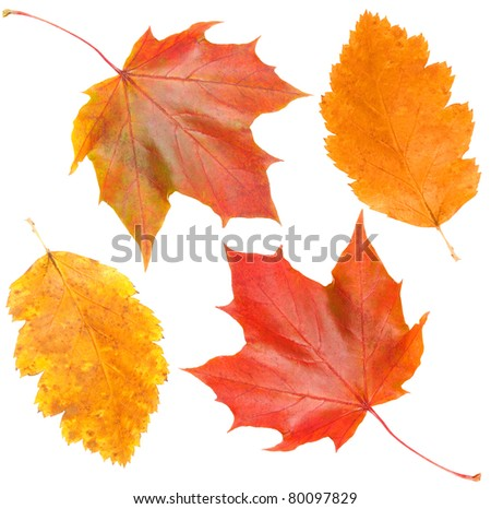 yellow and red leaves on white backgrounds