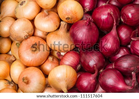 Yellow and red onions. Nature  background