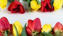 Yellow and red tulips on white wooden board. Background, pattern, texture.