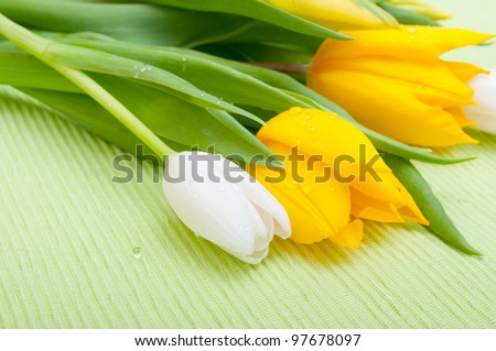 Yellow and White Tulips on Green Tablecloth