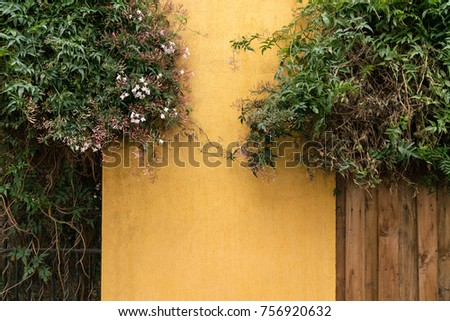 Yellow and wooden plank wall background with white flower, foliage and copy space. #756920632