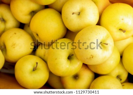 Yellow apples close up fresh beautiful fruit background , delicious apples in Aomori Tohoku city also has the largest apple farming land in Japan.