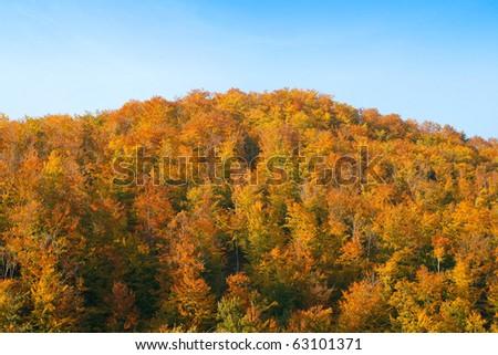 Yellow autumn forest texture