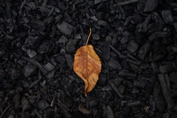 Yellow autumn leaf on black background from charcoal. concept of wildfire, Environment and pollution