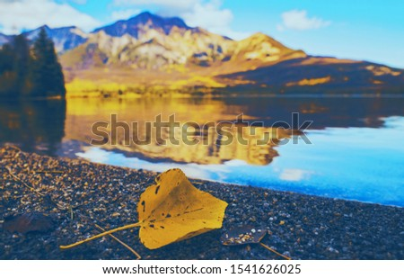 Yellow Autumn Leaf On Mountain Lake Shore #1541626025