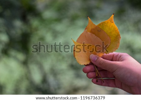 Yellow autumn leafs in girl hand whit natural green background in the forest/ Autumnal background  #1196736379