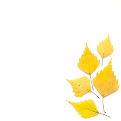 Yellow autumn leaves isolated on white. Copy space. Top view. - Image