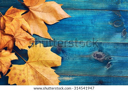 Yellow autumn leaves on blue rustic background. Season wallpaper