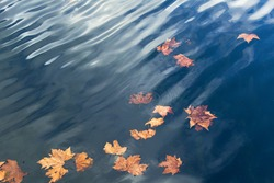 Yellow autumn maple fallen  leaves on blue lake water surface with waves and sky reflation