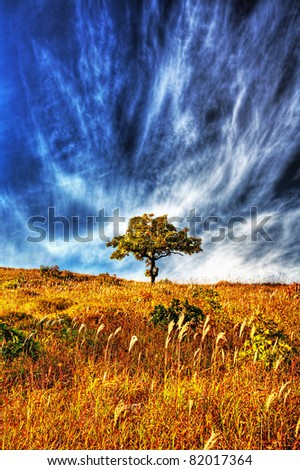 yellow autumn oak tree on the hillside