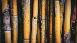 Yellow bamboo background picture green bamboo leaves