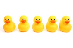Yellow bath time ducks in a row on a white background