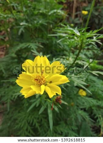 yellow beautiful flower background pic