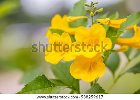 Yellow bells flower ez canvas yellow bells flower mightylinksfo
