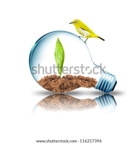Yellow bird on top of Light bulb with plant inside