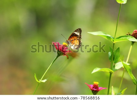 Yellow, black and orange butterfly on a purple flower.