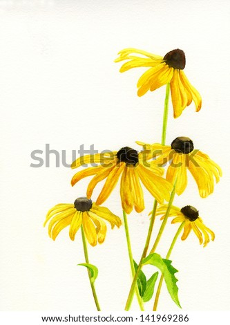 Yellow Black Eyed Susans.  Watercolor of 5 yellow black eyed susan flowers with a white background.
