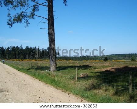 yellow brick road trees woods road vanishing point perspective sun blue sky