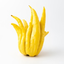 Yellow Buddha's hand fruit (open hand) on white background,  ornamental citrus with magnificent fruit shaped like a hand. Fruit is yellow and unusual as it is all rind, no flesh or seeds