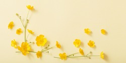 yellow buttercups on yellow paper background
