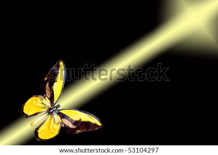 yellow butterfly flying on gilded ray on black background