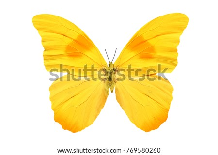 yellow butterfly isolated on white #769580260