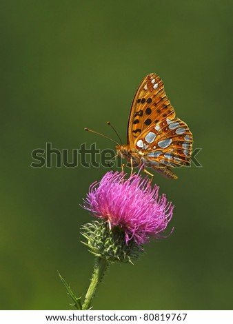 Yellow butterfly on a pink flower 2.