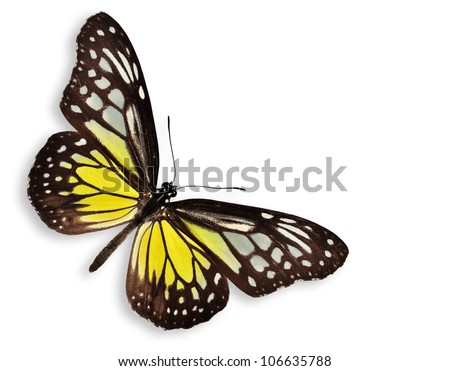 Yellow butterfly (The Yellow Glassy Tiger) isolated on white