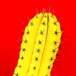 Yellow Cactus. Creative design. Minimal fashion art gallery