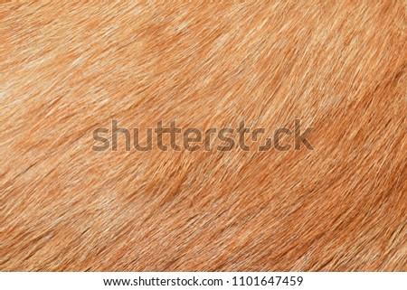 Yellow cat fur texture background Foto stock ©
