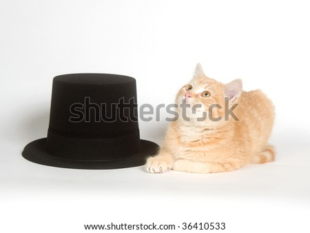 Yellow cat next to a black top hat on white background